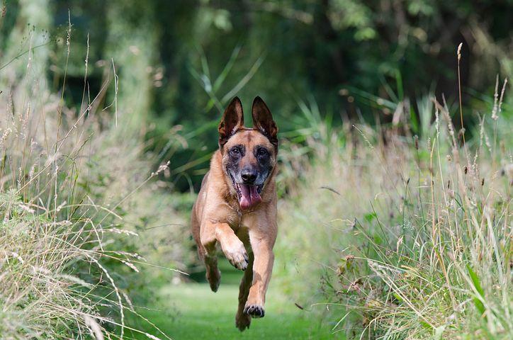 Jí váš pes trávu?