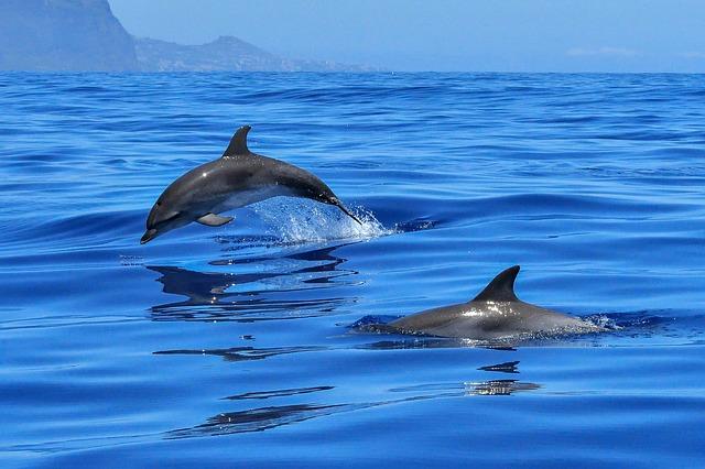dva delfíni